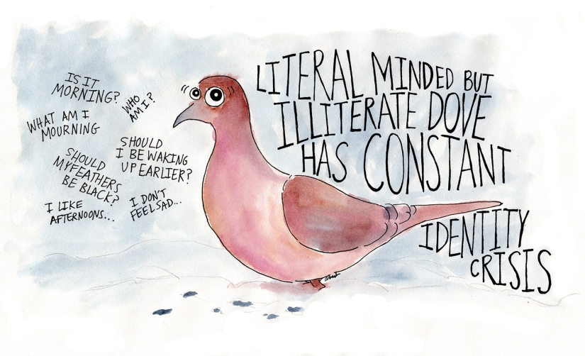 literal-dove-1500px