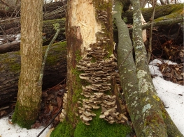 mushrooms-1500px