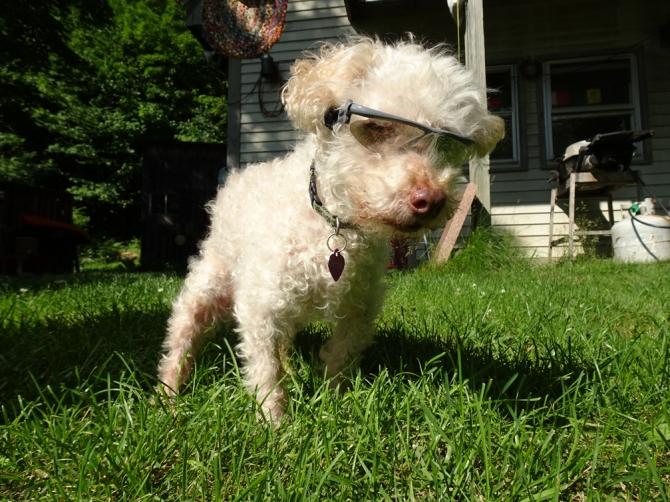 L-glasses