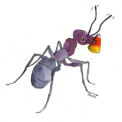 ant-sm