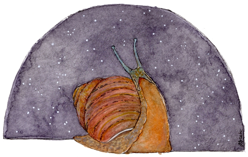 snail-gazing001